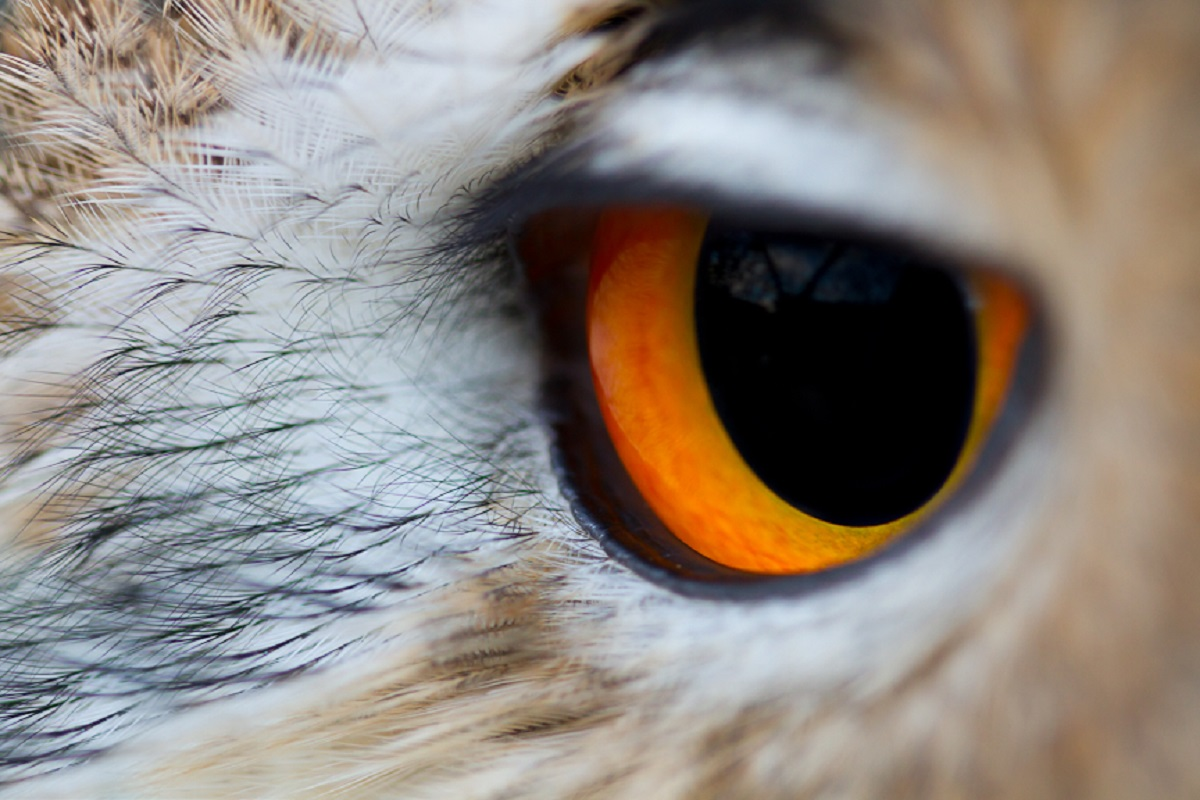 Birds of Prey at Henley River and Rowing Museum