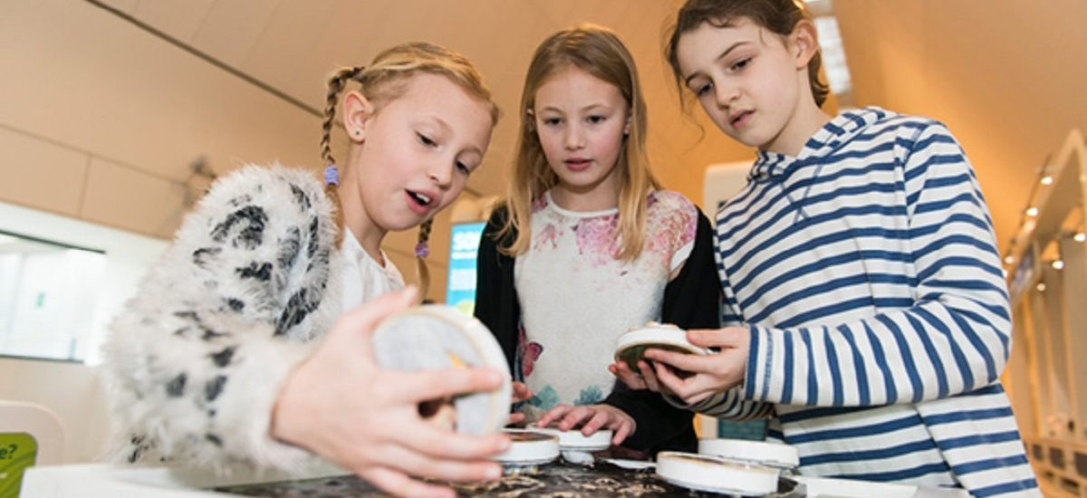 Merry May Half Term Fun at the River & Rowing Museum!