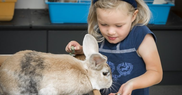 Children go Free at The Green Dragon Eco Farm this January