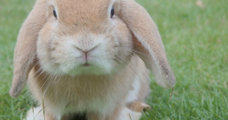 What's on over the Easter School Holidays in Buckinghamshire 2019
