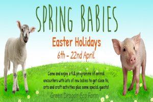 Spring babies event green dragon eco farm april 2019